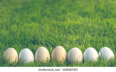 Spring Green Garden and Easter Eggs