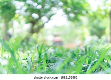 spring green grass background  with beauty bokeh