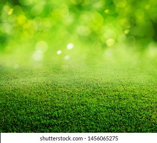 spring green grass and blurred background