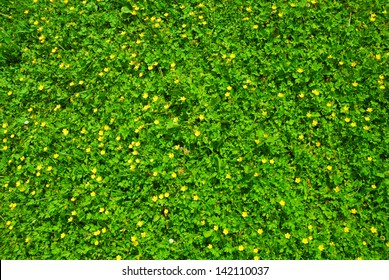 Spring green grass texture with flowers