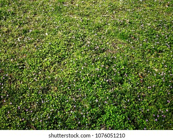 spring green meadow