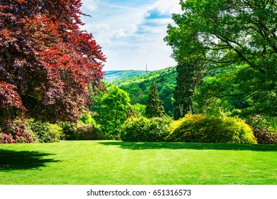 Spring green park. City park with blooming rhododendron, fresh lawn and copper beech tree. Springtime landscape background. Beauty in nature
