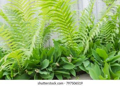 Spring green plant background: Fern and lily of the valley in garden