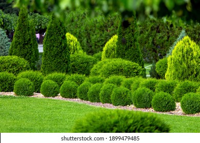 spring green plants green grass with cut bushes shape design sprinkled with natural stone mulching in a park with plants on a summer day.