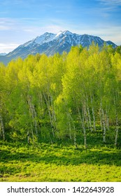 Spring green in the Wasatch Front, Utah, USA.