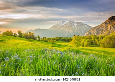 Spring green in the Wasatch Mountains, Utah, USA.