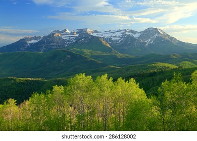 Spring greenery in the Wasatch Mountains, Utah, USA.