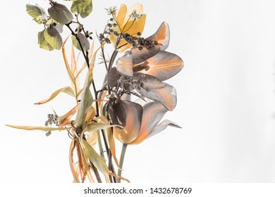 spring herbs and flowers, yellow tulips, botanical composition on a light background.