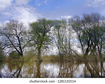 The spring high-water season on river, flood caused by streams of snow melt water flowing into watercourses. Flooded floodplain forest, willow and osier