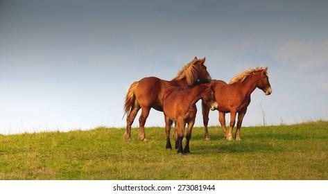 Spring Horse - Warmia Poland