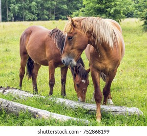 Spring. Horses on the pasture