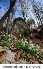 Spring inside rocks
