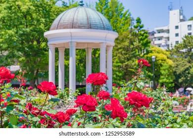 Spring in Japan, the rose garden in kanagawa yokosuka.