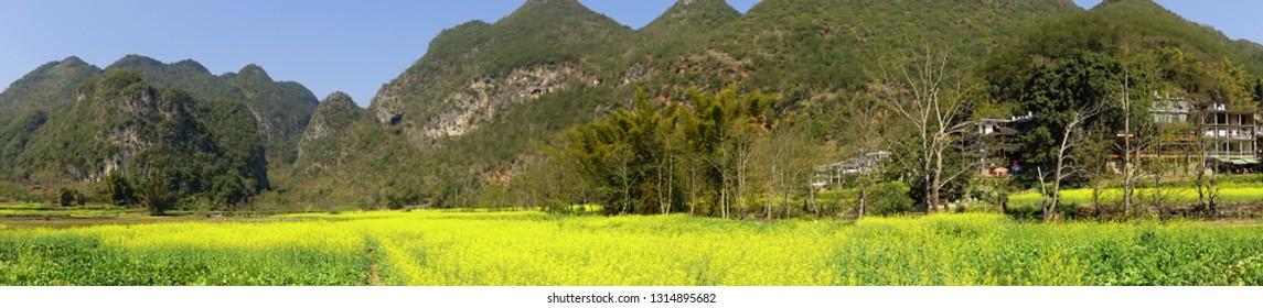 Spring karst landforms and rape flowers in guangxi, China.panorama