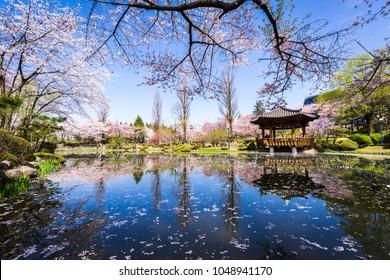 ???_bomunjeong spring korea