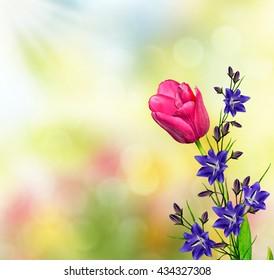 Spring landscape. beautiful spring flowers tulip