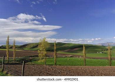spring landscape and blue sky New Zealand