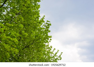 Spring landscape - bright green trees with young foliage on a bright warm sunny day in early spring