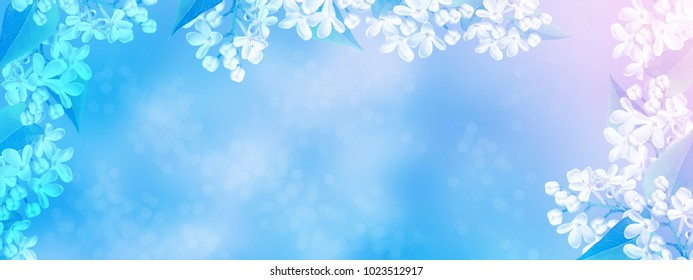 Spring landscape. Bunches of flowers of lilac