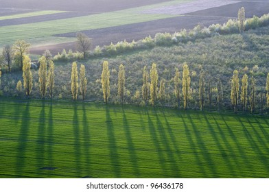 Spring landscape contains fields, orchard and a row of poplars on the field boundary.  The bright green winter-wheat area is in the foreground.