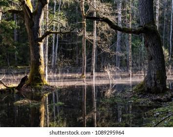Spring landscape with flooded trees. Farnebofjarden national park in Sweden.