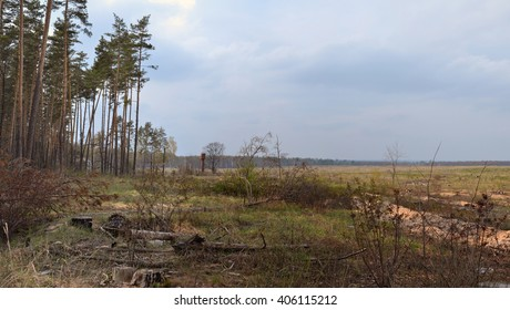 Spring landscape. Forest and cut down the field. The Nature Of Russia. Panorama.