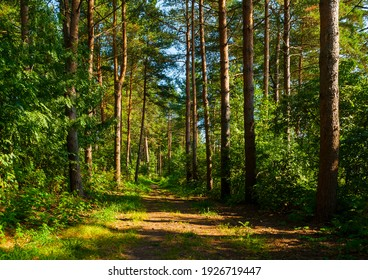 Spring landscape, spring forest and narrow path lit by soft sunlight, sunset in the forest, forest trees under the sun