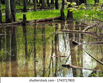 Spring landscape with forest reflected in calm water. Some trunks lay in water. First green leaves on trees and fresh grass on the ground. Taken during high water season in Michigan in May. No people.