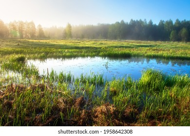 Spring landscape. Fresh foggy sunrise. Flooded meadow surrounded forest. Spring river flood in woodland. Woods swamps. - Shutterstock ID 1958642308