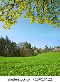 Spring landscape with green clover field.