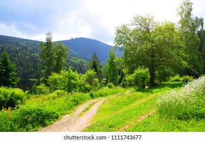 Spring landscape. Hiking trail at the Kleiner Arbersee lake in the National park Bavarian forest,Germany.