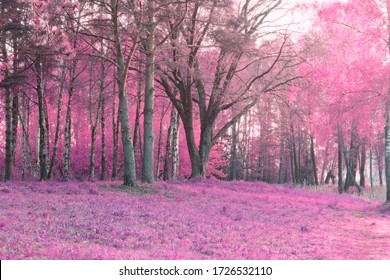 spring landscape and infrared rays