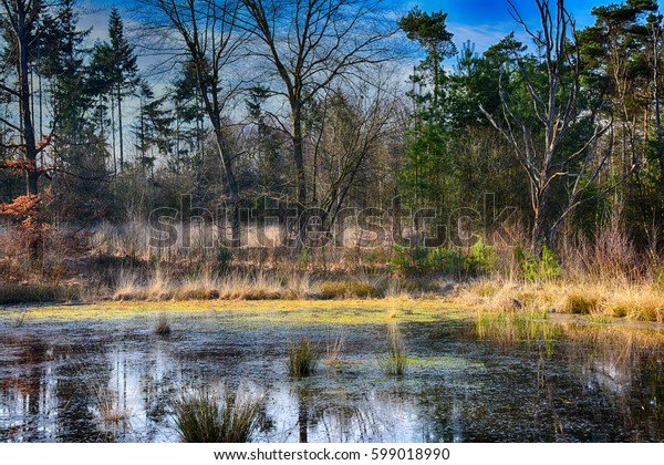 Spring landscape. Lake in the forest with spring colours.