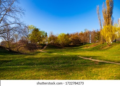 Spring landscape. Lawn and blooming cherries in the park.