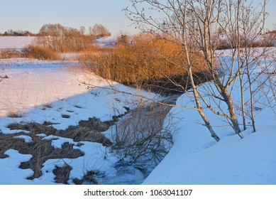 Spring landscape with melting snow and alder bushes in sunset light.