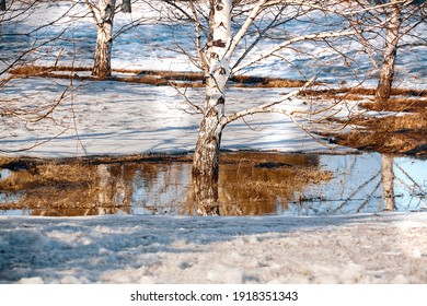 Spring landscape with melting snow and thawed patches in forest. Thawed patches. Spring Landscape. Thaw in ice where reflections are visible