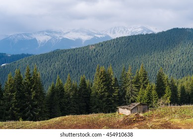 Spring landscape in the mountains. Sunny day. Fir forest on the slopes. Last snow on the mountain tops. Carpathians, Ukraine, Europe
