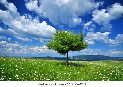 Spring landscape nature background