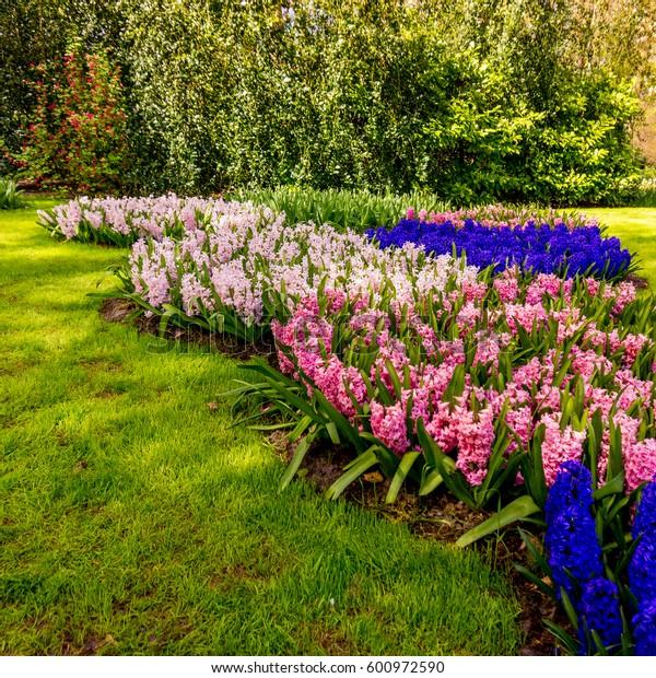spring landscape.  Spring nature background.  beautiful garden