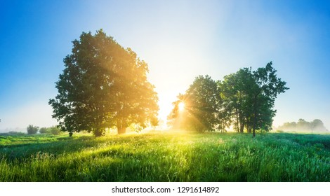 Spring landscape. Spring nature scene. Trees on green meadow in morning sunlight. Sunrise on fresh field