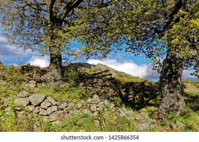 Spring Landscape in North Corsica