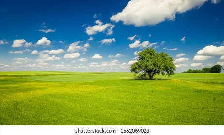 Spring landscape with one tree, green field and blue sky