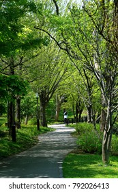 Spring landscape of the park in Sapporo