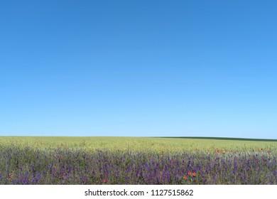 Spring landscape in Podilski Tovtry National nature park, Podolia region of Ukraine