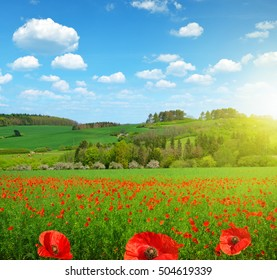 Spring landscape with poppy field in sunny day.