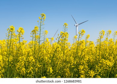 spring landscape of rapeseed flower field and wind turbines