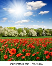 Spring landscape with red poppy