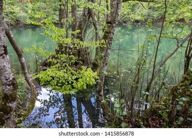 Spring landscape in (seven lakes) Yedigoller National Park Bolu, Turkey