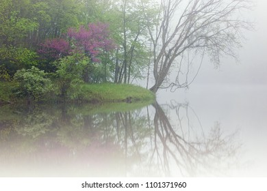 Spring landscape of the shoreline of the Kalamazoo River in fog with a redbud in bloom, Michigan, USA