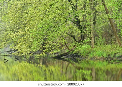 Spring landscape of the shoreline of the Kalamazoo River, Michigan, USA